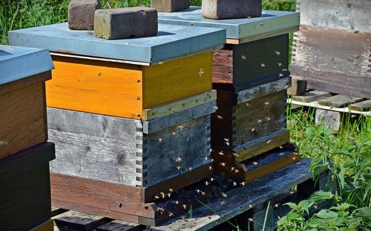 Type of Hive