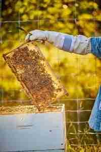 Assembling the Hive