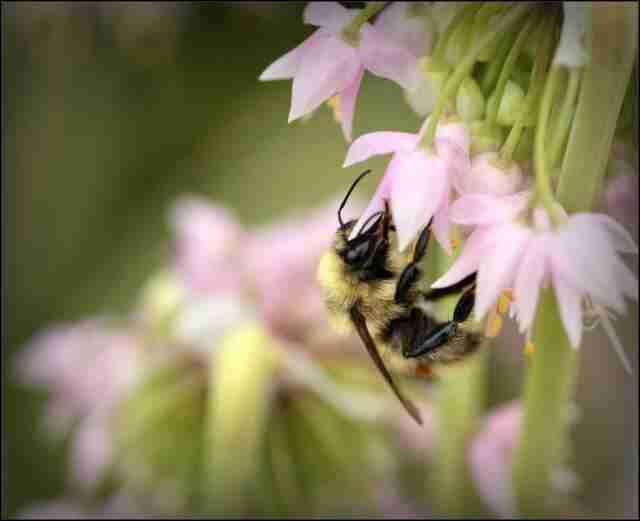 JUNE Beekeeping